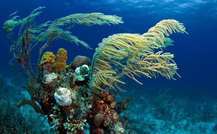 Bahamas has coral reefs