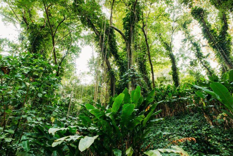 rainforest in Jamaica