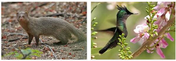 Grenada Animals