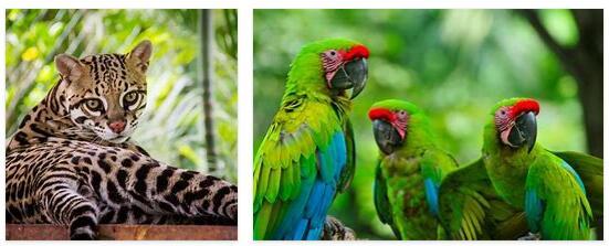Nicaragua Animals