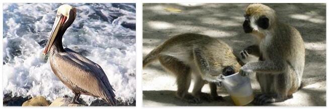 Saint Kitts and Nevis Animals