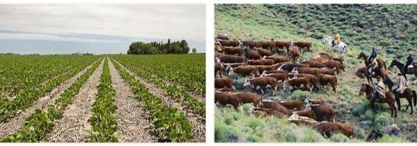 Argentina Agriculture