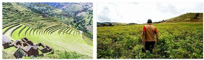 Peru Agriculture